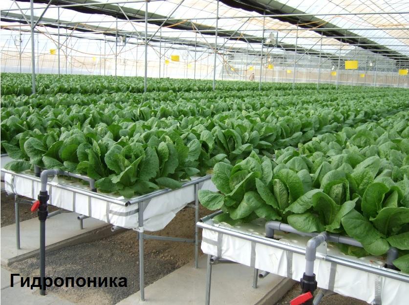 Технологии для выращивания овощей