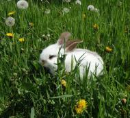Вольерное содержание кроликов. Кокцидиоз, новорожденные крольчата, самцы. Животные, растения, с/х