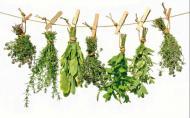 Чай для похудения убивает!. Питание, Экология и здоровье