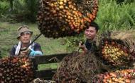 Что такое пальмовое масло?. Животные, растения, с/х, Питание