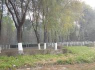 Зачем белят деревья?. Животные, растения, с/х, Экология и здоровье