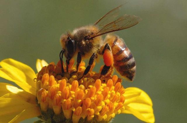 Признаки натурального меда.. Животные, растения, с/х, Питание, Экология и здоровье