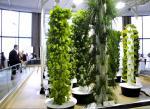 Что такое гидропоника и аэропоника? Инновационные технологии выращивания растений.. Животные, растения, с/х