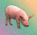 Свиная чума 2015 – человек все еще не всемогущ!. Экология и здоровье