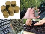 Торфяные и кокосовые таблетки для выращивания рассады. Животные, растения, с/х