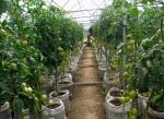Как выбирать томаты. Животные, растения, с/х